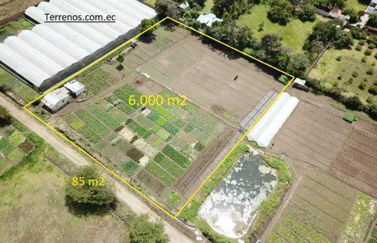 Terreno en venta, Tumbaco 6.000 m2. Sector Buena Esperanza.