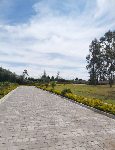 Guambi 2