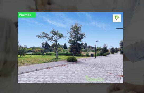 Terreno de venta en Puembo 2.000m2, Arrayanes se puede construir 2 casas