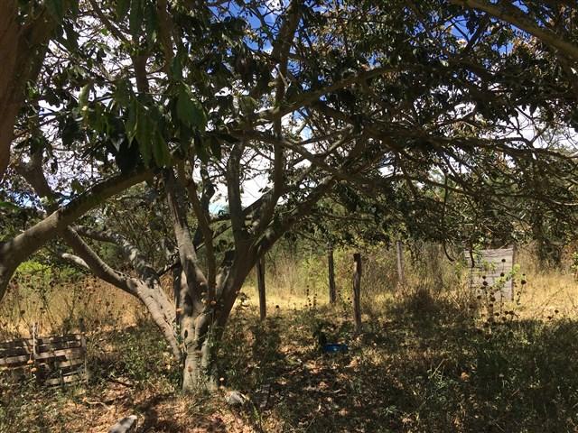 05. Plantas - Guayaba