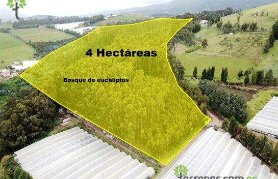 Venta de terreno 4 hectáreas Cayambe.